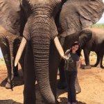 Photo de The Elephant Camp