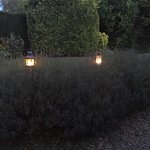 Lanterns at dusk in the garden