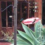 Savegre Hotel, Natural Reserve & Spa Photo