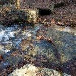 Michaux State Forest照片