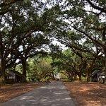 Oak Alley Plantation - Experience Cajun Country Tour: Bayou Swamp and Plantation Tour