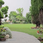Our garden lush green & full of colour with our Chinar Tree,Cyprus Trees, hydrangeas & rose bush