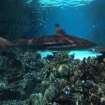 Black Tip Reef Shark.