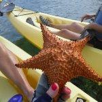 Photo de Paddles Snorkel and Kayak Eco Adventure