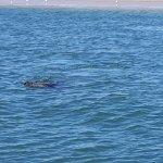 Photo of Mola Mola Safaris