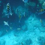 Foto de Playa Coral