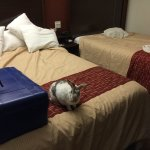 My rabbit, Narvik; always finds the beds comfortable at the Red Roof Inn.....