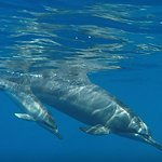 We got to swim with this momma and baby for almost 20 minutes in the ocean!