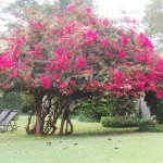 Just 1 of the many flowering trees