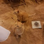THE RESIDENT CATS !!