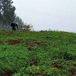 Entoto Hill