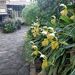 IMG_20171118_070851_large.jpg