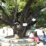 Kuthodaw Paya, il cortile con un albero secolare
