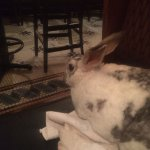 My pet rabbit, Narvik; enjoys the view from our booth.....