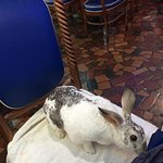My rabbit, Narvik; nudges my leg from his seat.....
