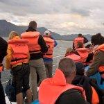 whale tour hermanus