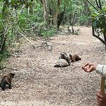Photo de Monkeyland Primate Sanctuary