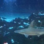 Photo of Adventure Aquarium