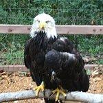 Billede af World Bird Sanctuary