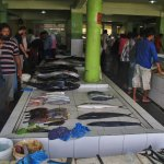 Foto Male Fish Market