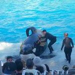 Photo of SeaWorld