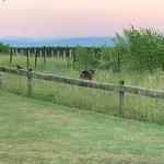 Photo de Brackenridge Country Retreat