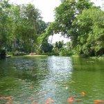 Bassin avec carpes Koï