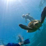 Snorkeling with turtles at Silk Cay