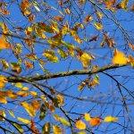 Autumn colour at Batsford
