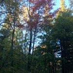 Arrowhead in autumn
