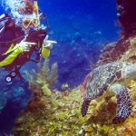 Sea turtles on our third dive!
