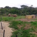Los animales en su habitat