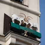The goats - symbol of Poznan - fighting once a day at noon. Must see it!