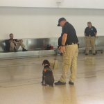 At the attached airport we watched police dogs during morning training.