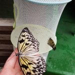 Butterfly Park & Insect Kingdom Foto