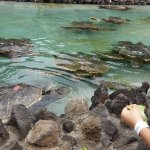 Sea Life Park Hawaii Picture