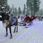 Santa Day - Reindeer Sleigh Ride