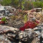 Robberg Nature Reserve Foto