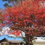 Foto de Kofuku-ji Temple