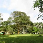 Grand trees and open spaces