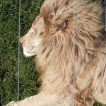 lion cango ranch
