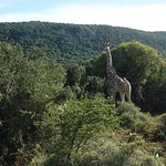 Photo of HillsNek Safaris, Amakhala Game Reserve