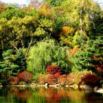 Autumn at the Garden of Reflection pond.