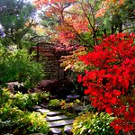 Beautiful color in the Pond Strolling Garden