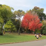 Photo de Central Park Sightseeing