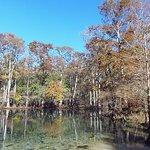 Manatee Springs State Parkの写真