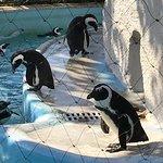Foto de Ueno Zoo