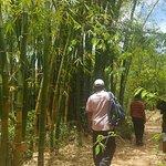 Photo de Lemurs Park