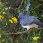 A 'songful' bird seen along the trail