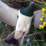 Another wild bird seen